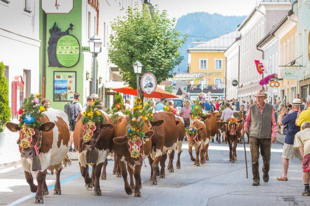 Almabtrieb Tourismusverband Radstadt Lorenz Masser 1