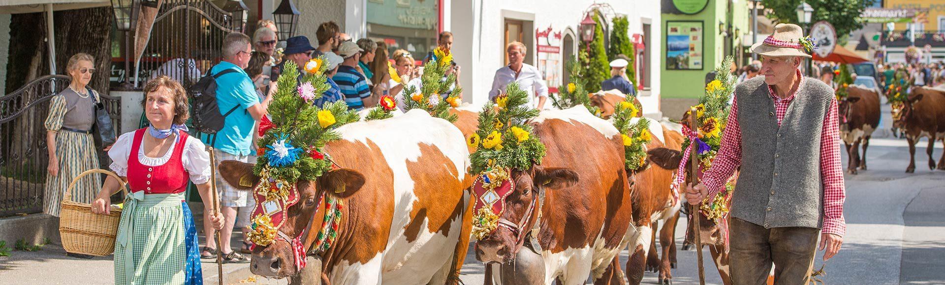 Almabtrieb Tourismusverband Radstadt Lorenz Masser 2