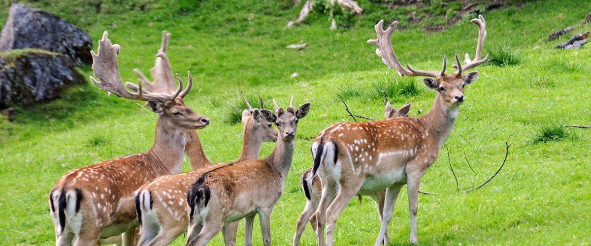 Ausflugsziel Wildpark Untertauern 1